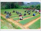 Đẩy mạnh xây dựng và nâng cao hiệu quả hoạt động của các khu kinh tế - quốc phòng