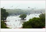 Bảo tồn và sử dụng bền vững các vùng đất ngập nước