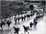 谈九号公路南寮反击战役的作战指导艺术