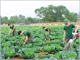Following Uncle Ho's teachings, the Army Corps 2 enhances agricultural production and practice of thrift