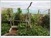 Vườn rau được trồng trên tầng 2 của đảo Tốc Tan