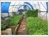 Vườn rau được che kín trên đảo Phan Vinh