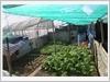 Vườn rau trên đảo Sinh Tồn