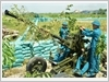 Thực hành huấn luyện cho dân quân tự vệ tại trận địa pháo